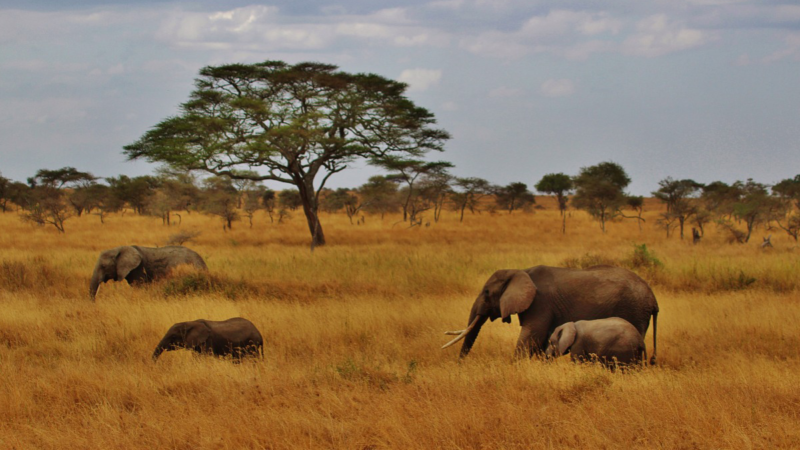 Travel To Tanzania: Safaris And Beaches