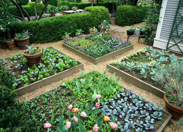 Tips On Growing Vegetables For First Time Gardener